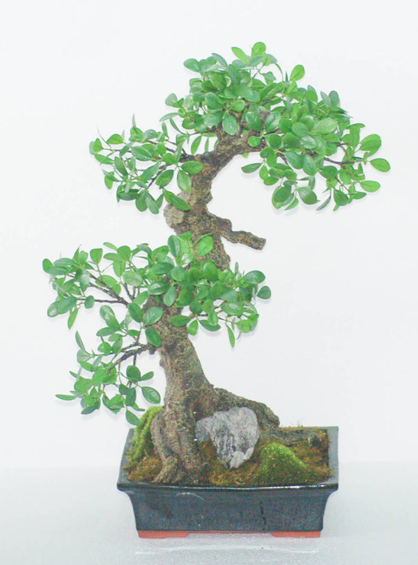 "24"" BONSAI TREE"
