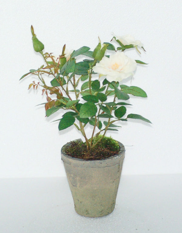 "12.5"" POTTED CREAM ROSE"