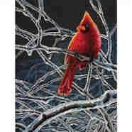 Ice Cardinal by Mark Mueller