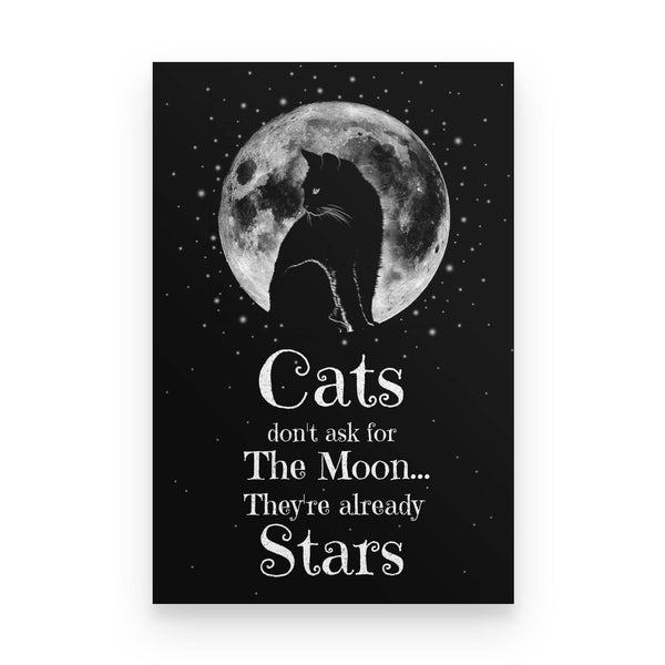 Cats Are Already Stars