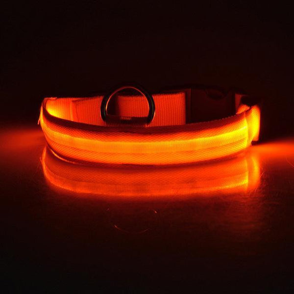 Pet Junxion accessories Orange / L USB Rechargeable LED Dog Collar