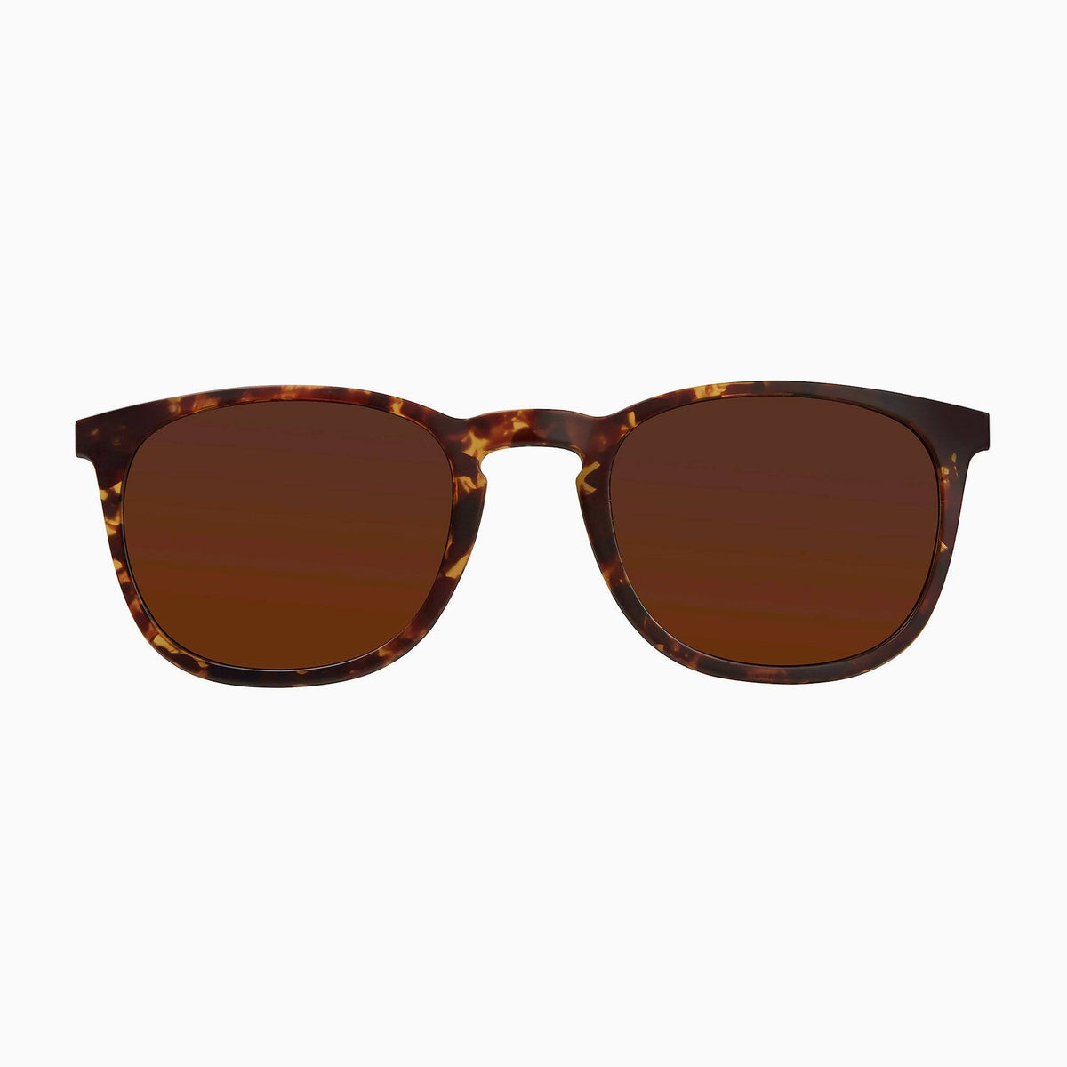 Dark Tortoise / Solid Brown Lens