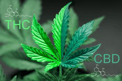 6 Reasons to Choose CBD Flower Over Marijuana