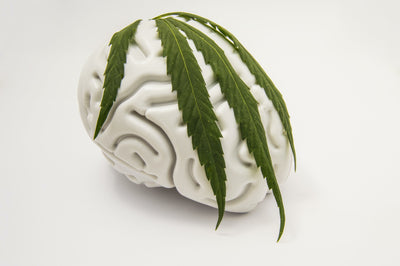 Head Change: How Do Hemp Cigarettes Interact With My Brain?