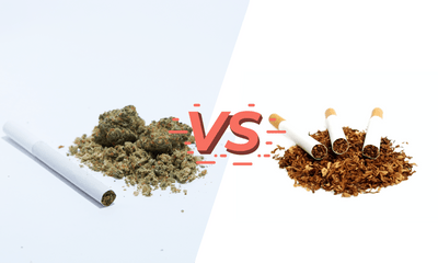 Hemp Cigarettes VS Tobacco Cigarettes: What Does The Research Say?