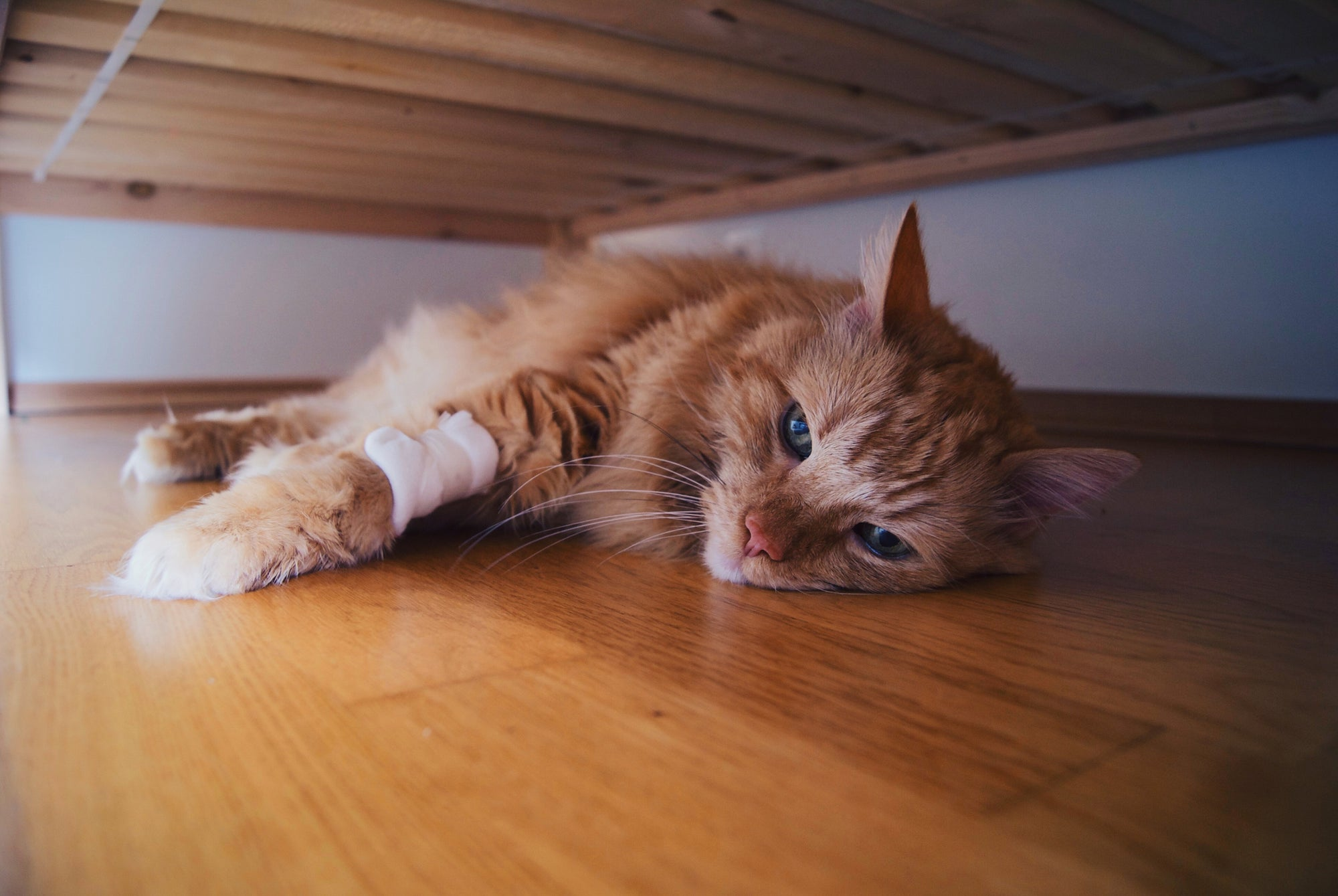 6 Signs Your Cat Is Dying :(