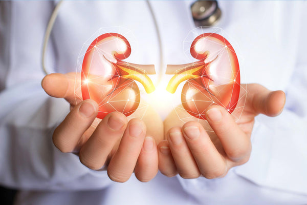 HEALTHY KIDNEYS = STRONG IMMUNITY: What You Need to Know About Your Kidneys and Your Immune System