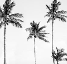 Load image into Gallery viewer, Palm Tree Mural