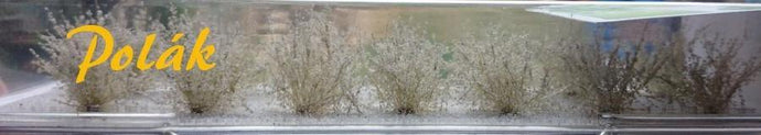 Low Flowering White Bush Item 9182