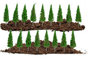 N Scale Spruce Trees Also For Architectural Models. - Poland's Best Home & Hobby