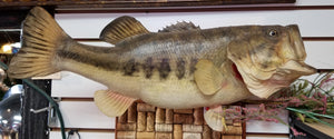 Large Mouth Bass Taxidermy - Wall Mounted