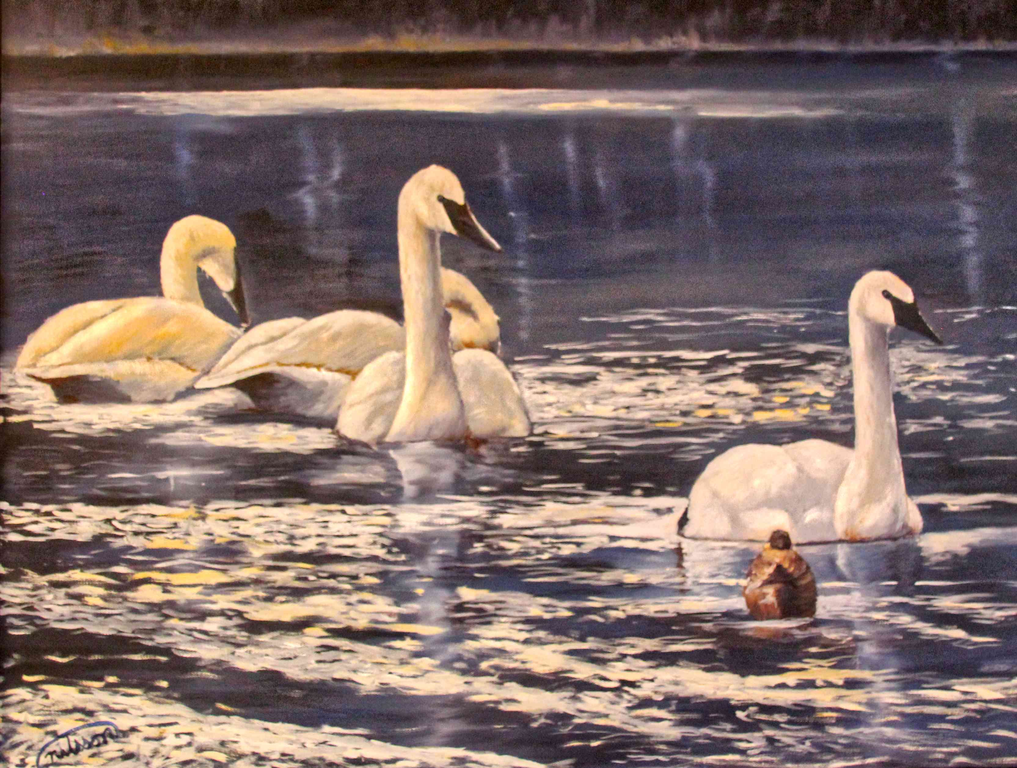 Four Swans and a Duck