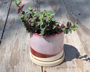 Plant Pot with Saucer Red
