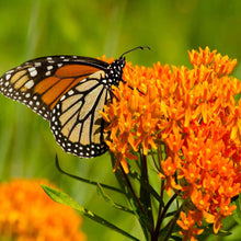 Load image into Gallery viewer, 2021 Monarch & Swallowtail Garden CSA Share --> One Time Offer!