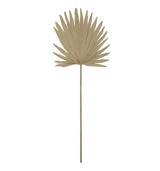 Dried sun fan palm