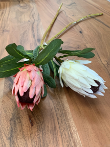 Protea stem - 2 colours