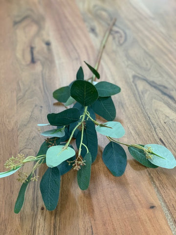 Eucalyptus stem- green