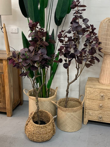 Smoke leaf potted tree- 2 sizes