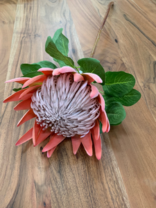 King protea stem - assorted colours