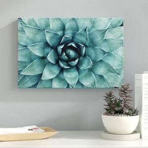 'Turquoise Succulent' - Wrapped Canvas Photograph Print #6025
