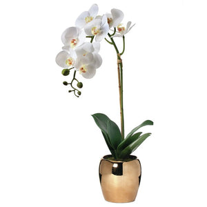 Phalaenopsis Orchids Stem in Gold Pot   #4277