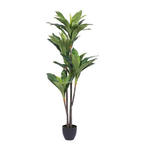 "60"" Real Touch Dracaena #860"