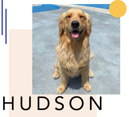 How to Become a Pet Influencer with Hudson