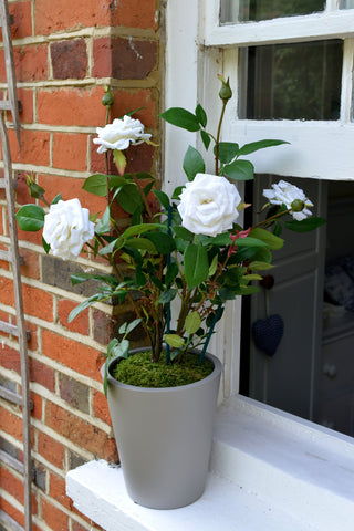 Harwood - Artificial white rose bush