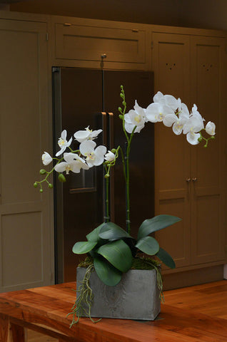 Cara - White Artificial Orchid arrangement in metal trough