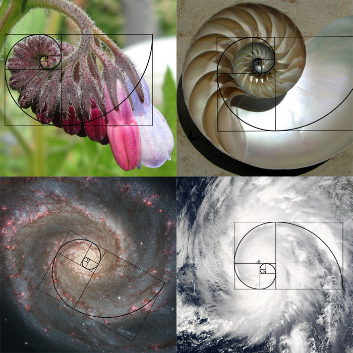 fibonacci spirals in nature, shells, folwers, galaxies, hurricanes