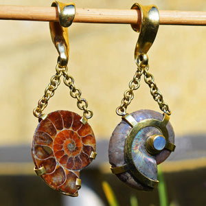 Ammonite Ear Weights