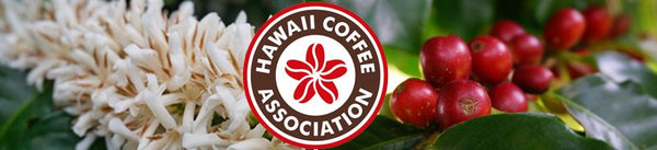 Moloa'a Bay Coffee Named a Kaua'i District Winner at HCA's 11th Annual Cupping Competition