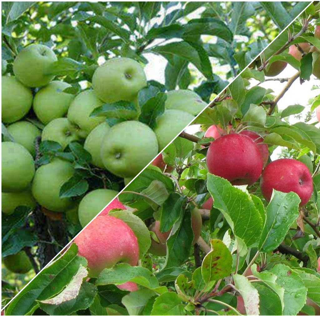 PRE ORDER - APPLE 2 WAY PINK LADY / GRANNY SMITH - BARE ROOTED