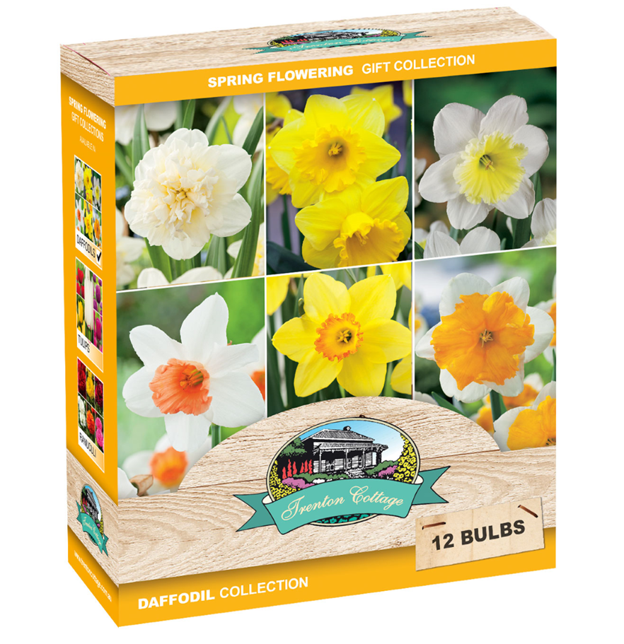 DAFFODIL COLLECTION GIFT BOX
