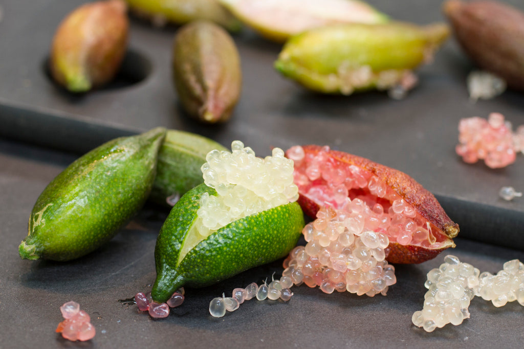 FINGER LIME - 3 VARIETIES