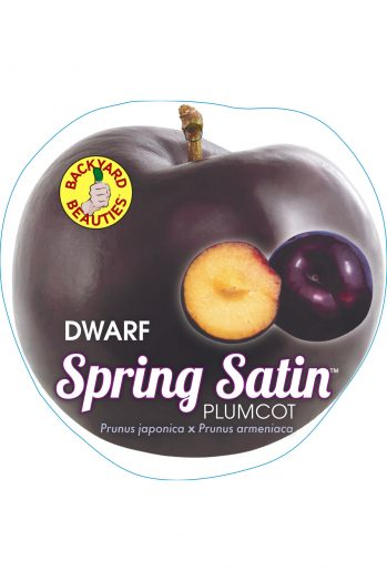 PRE ORDER - PLUMCOT DWARF SPRING SATIN - BARE ROOTED