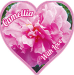 CAMELLIA - WITH LOVE  180MM