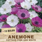 ANEMONE COTTAGE PINK & WHITE 15 PACK