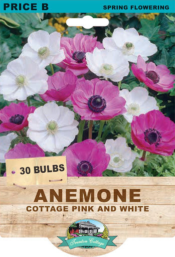 ANEMONE COTTAGE PINK & WHITE 30PK