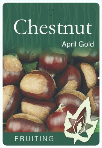 PRE ORDER - CHESTNUT APRIL GOLD - BARE ROOTED