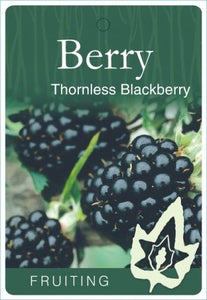 PRE ORDER - BARE ROOT BLACKBERRY THORNLESS - BARE ROOTED