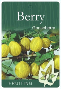 PRE ORDER - BARE ROOT GOOSEBERRY CAPTIVATOR - BARE ROOTED