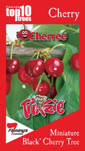 PRE ORDER - CHERRY TRIXZIE BLACK CHERREE - BARE ROOTED
