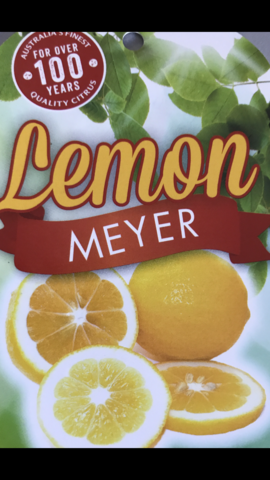 LEMON MEYER 25CM