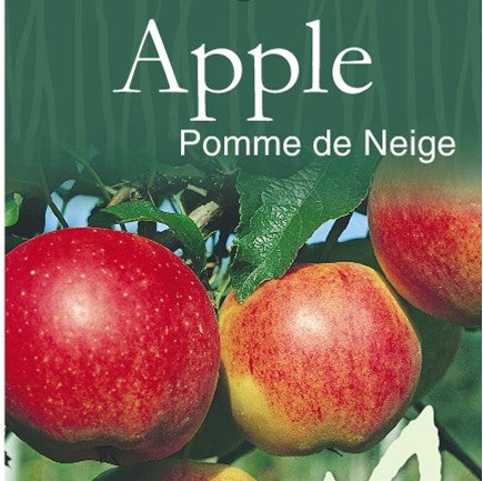 PRE ORDER - APPLE POMME DE NEIGE LADY IN THE SNOW - BARE ROOTED