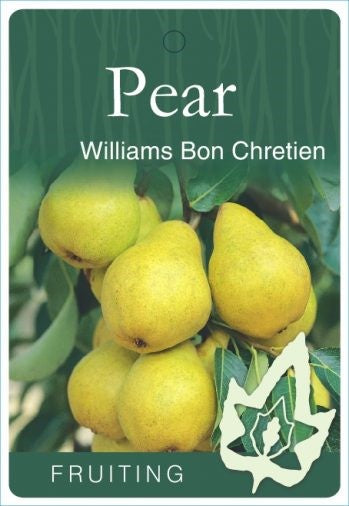 PRE ORDER - PEAR WILLIAMS BON CHRETIEN - BARE ROOTED
