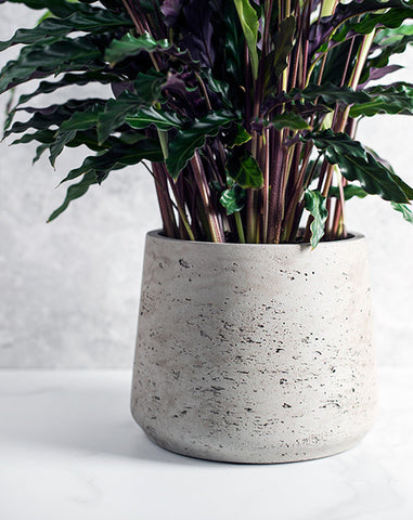 Tapered Cement Pots
