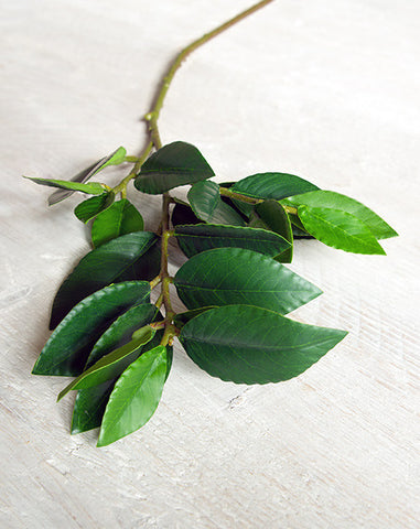 Faux Bay Leaf