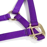 Intrepid International Nylon Miniature Horse Halter