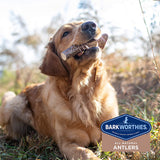 NEW Barkworthies Hand Selected, Naturally Shed Split & Whole Elk Antlers - Premium Long Lasting, Odor Free Dog Chews for All Dog Sizes and Breeds - No Chemical Treatments, No Added Preservatives